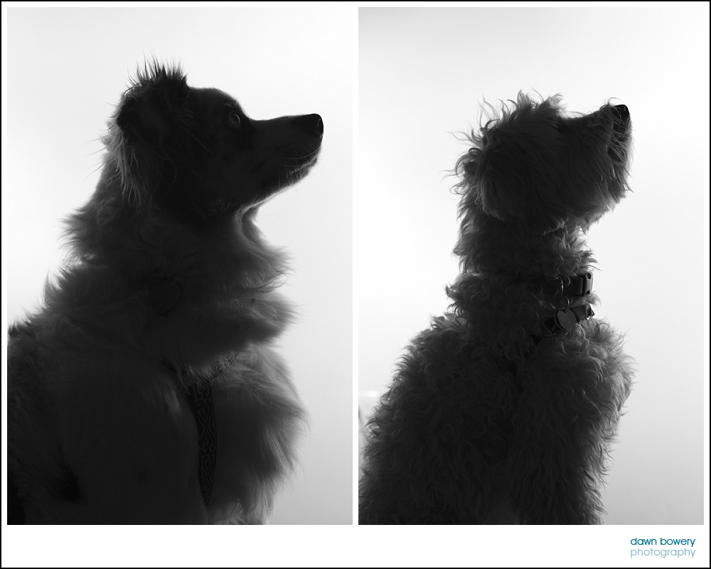 dogs, pet photography los angeles