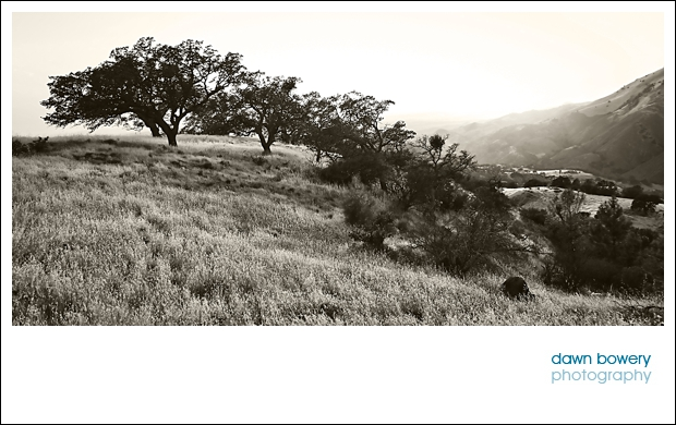 California fine art photography Santa Ynez landscape black and white